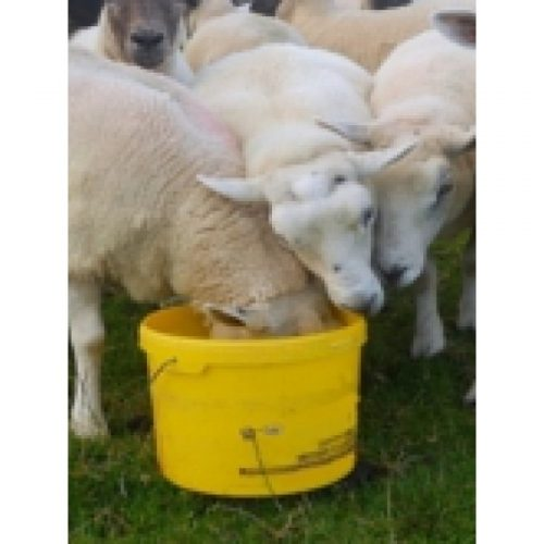 SHEEP MINERAL 20kg BUCKETS x 24