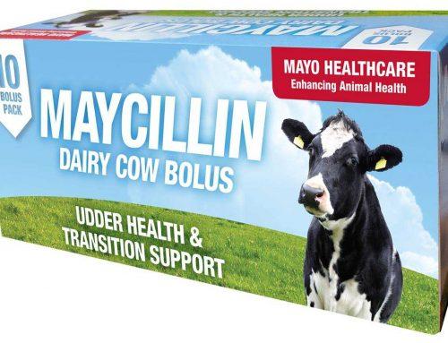 Maycillin Bolus